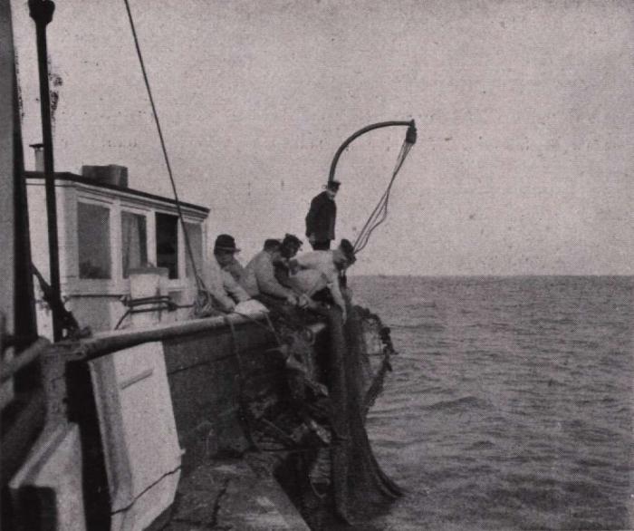 Gilson (1914, fig. 046)