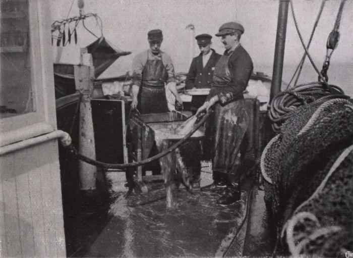 Gilson (1914, fig. 048)