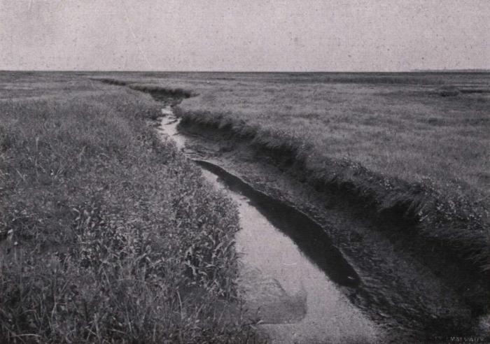 Gilson (1914, fig. 051)