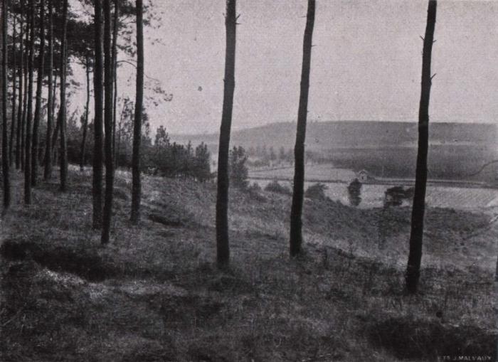 Gilson (1914, fig. 055)