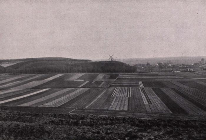 Gilson (1914, fig. 056)
