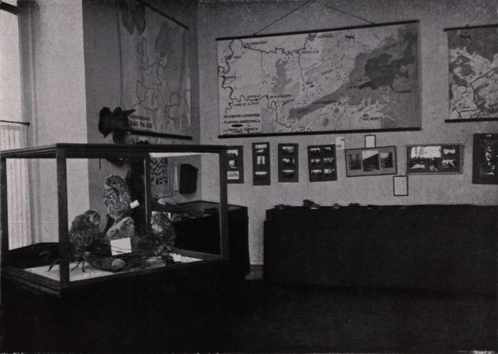 Gilson (1914, fig. 078)