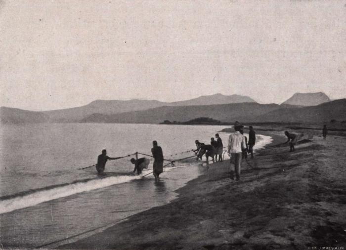 Gilson (1914, fig. 084)