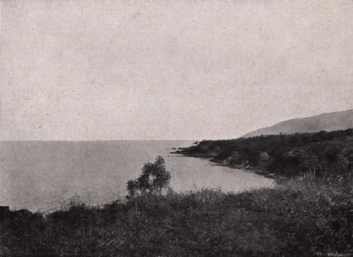 Gilson (1914, fig. 086)