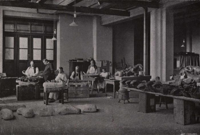 Gilson (1914, fig. 109)