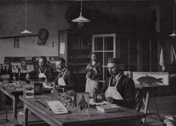 Gilson (1914, fig. 110)
