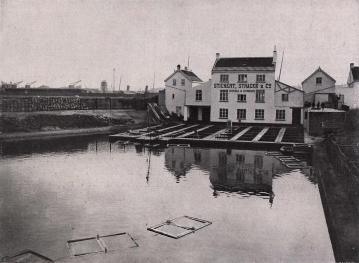 Gilson (1914, fig. 113)