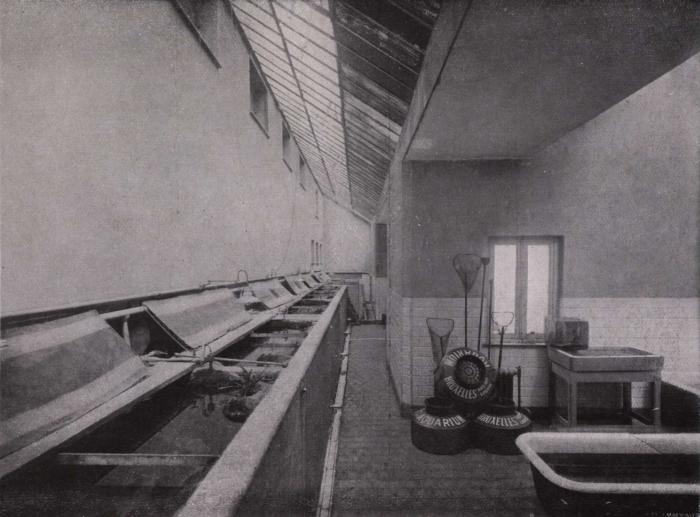 Gilson (1914, fig. 129)