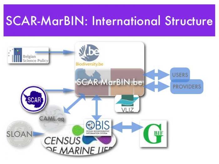 SCAR-MarBIN International Structure