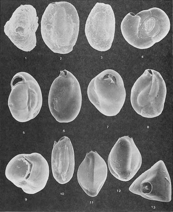 Foraminifera - Plate 11 - Miliolidae
