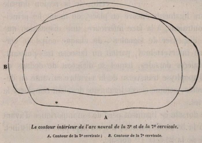 Van Beneden (1870, fig. 07)