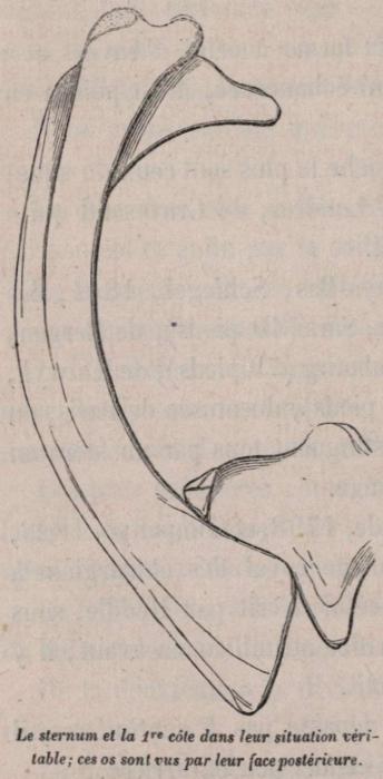 Van Beneden (1870, fig. 10)