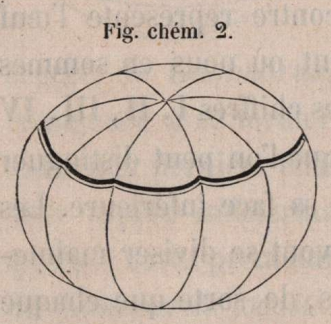 Van Beneden &amp; Bessels (1868, fig. chm. 2)
