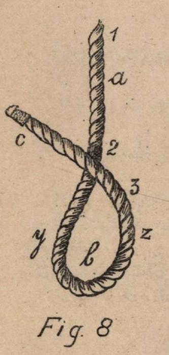 De Jonghe (1912, fig. 08)