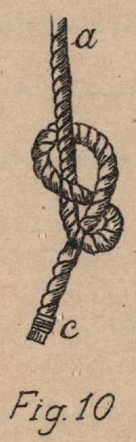 De Jonghe (1912, fig. 10)