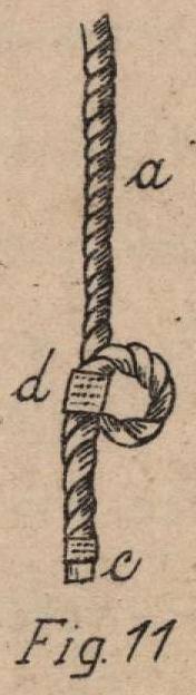 De Jonghe (1912, fig. 11)