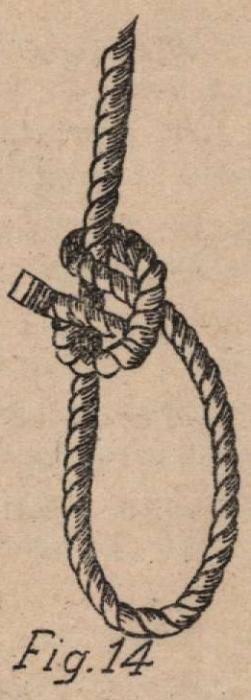De Jonghe (1912, fig. 14)