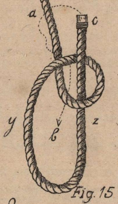 De Jonghe (1912, fig. 15)