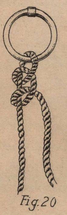 De Jonghe (1912, fig. 20)