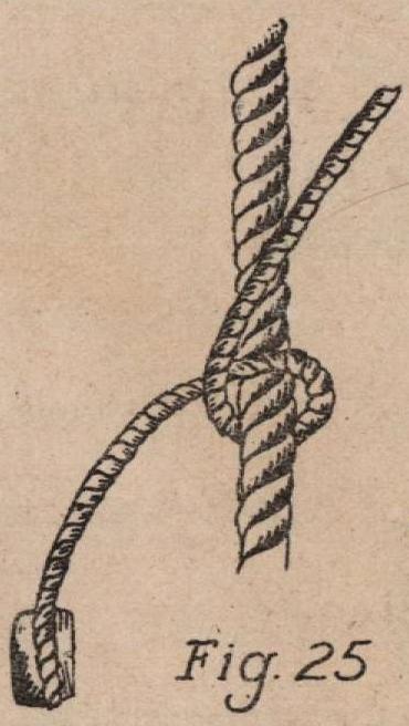 De Jonghe (1912, fig. 25)