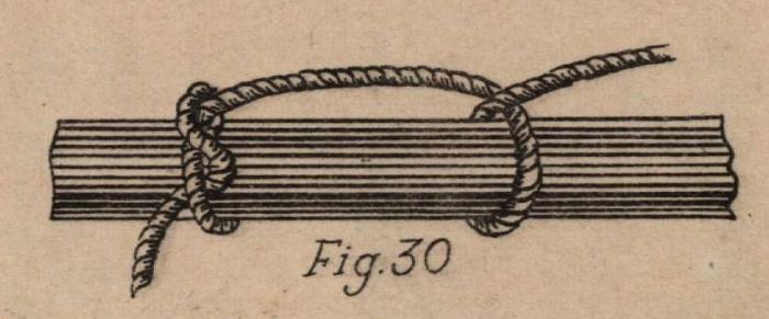 De Jonghe (1912, fig. 30)