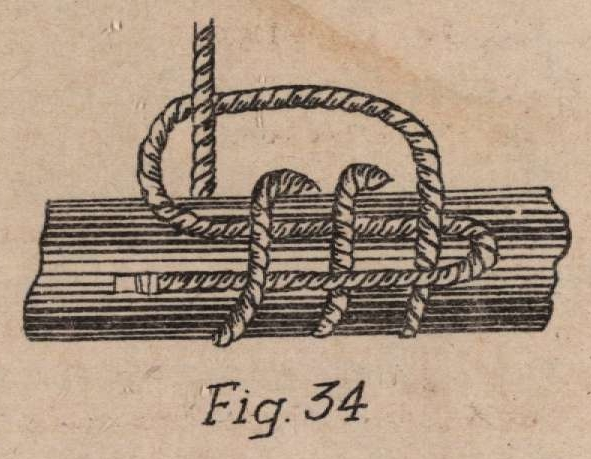 De Jonghe (1912, fig. 34)