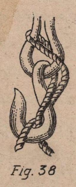 De Jonghe (1912, fig. 38)