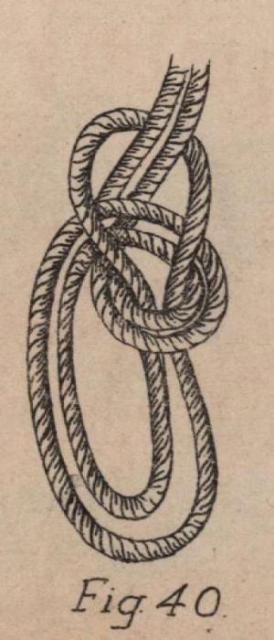 De Jonghe (1912, fig. 40)