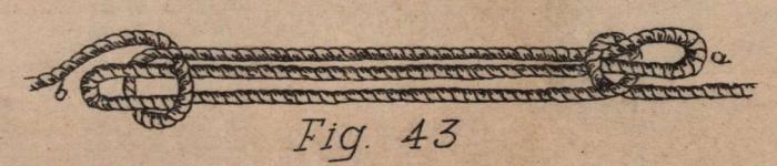 De Jonghe (1912, fig. 43)