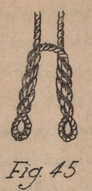 De Jonghe (1912, fig. 45)