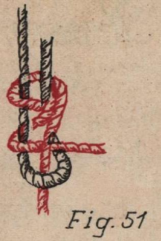 De Jonghe (1912, fig. 51)