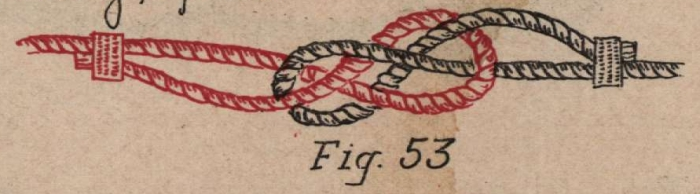 De Jonghe (1912, fig. 53)