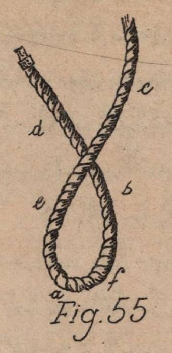 De Jonghe (1912, fig. 55)