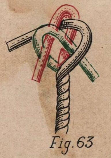 De Jonghe (1912, fig. 63)