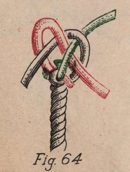 De Jonghe (1912, fig. 64)