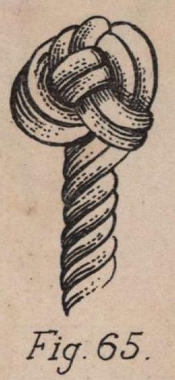 De Jonghe (1912, fig. 65)