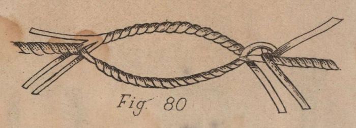 De Jonghe (1912, fig. 80)