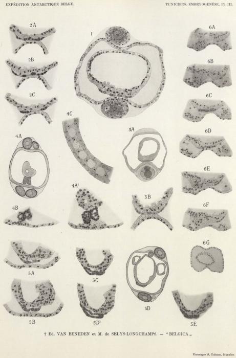 Van Beneden, de Selys Longchamps (1940, pl. 03)