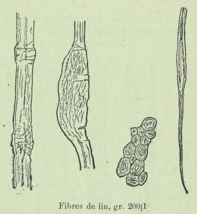 Huwart (1905, fig. C)