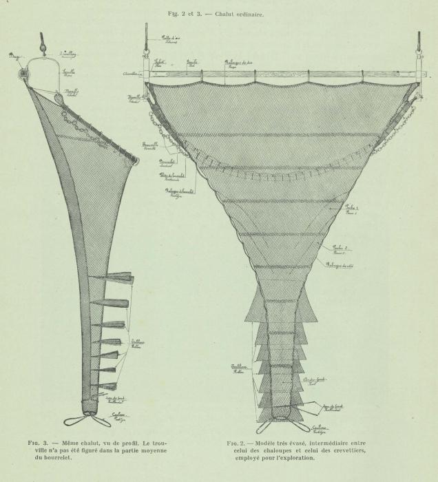 Gilson (1911, fig. 02, 03)