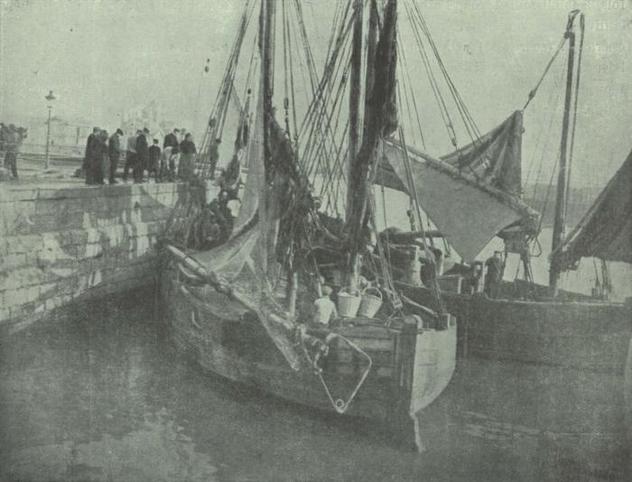 Gilson (1911, fig. 06)
