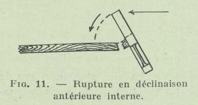 Gilson (1911, fig. 11)
