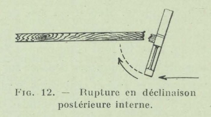 Gilson (1911, fig. 12)