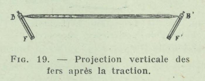 Gilson (1911, fig. 19)