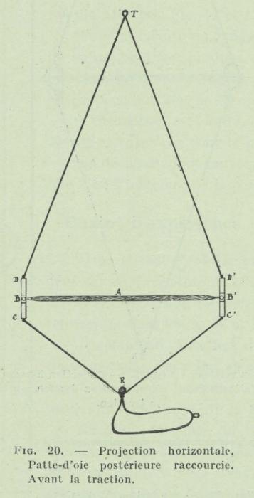 Gilson (1911, fig. 20)