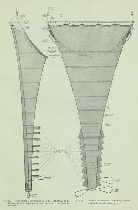 Gilson (1911, fig. 29, 30)