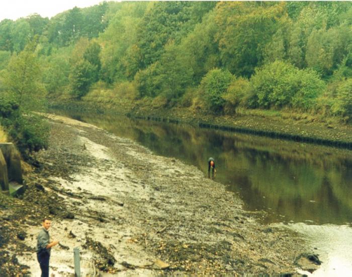 The upper Esk estuary.
