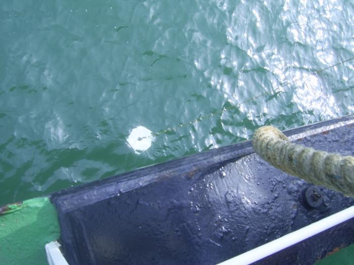 Secchi schijf: zichtbaarheid zeewater bepalen