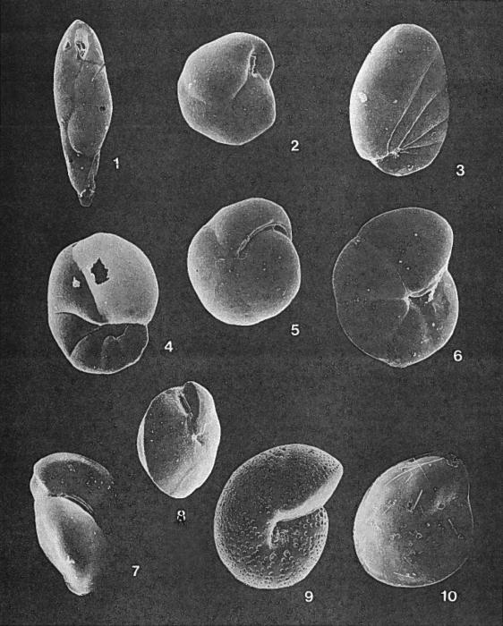 Forams -Plate 14- (Newfoundland)