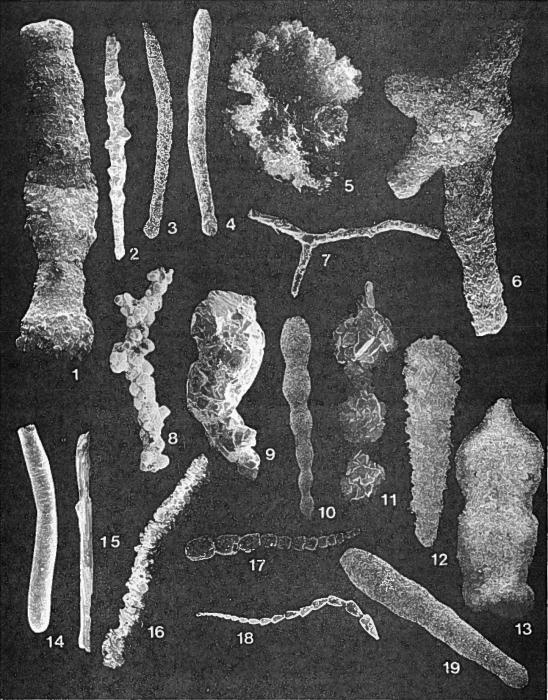 Forams -Plate 2- (Newfoundland)